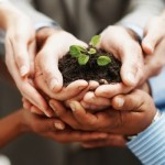 photodune-202925-business-development-hands-holding-seedling-in-a-group-s-650×400